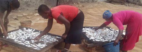 Women sorting fish for smoking